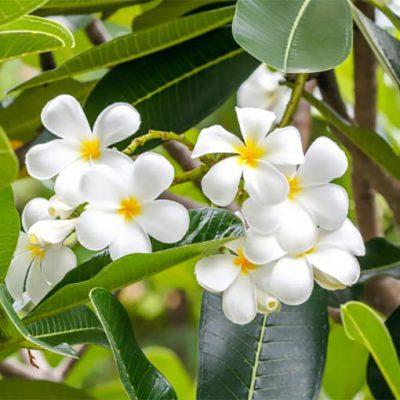 Senteurs Florales